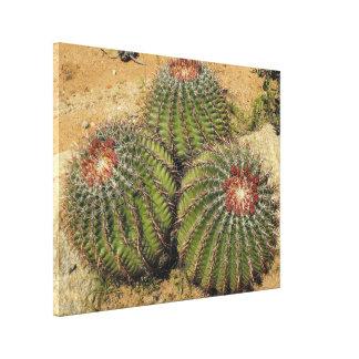 Ferocactus - cactus de barril impresiones en lona estiradas