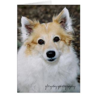 feroz, glorydaysphotography tarjeta de felicitación