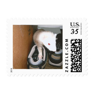 Ferret And the shoes Postage