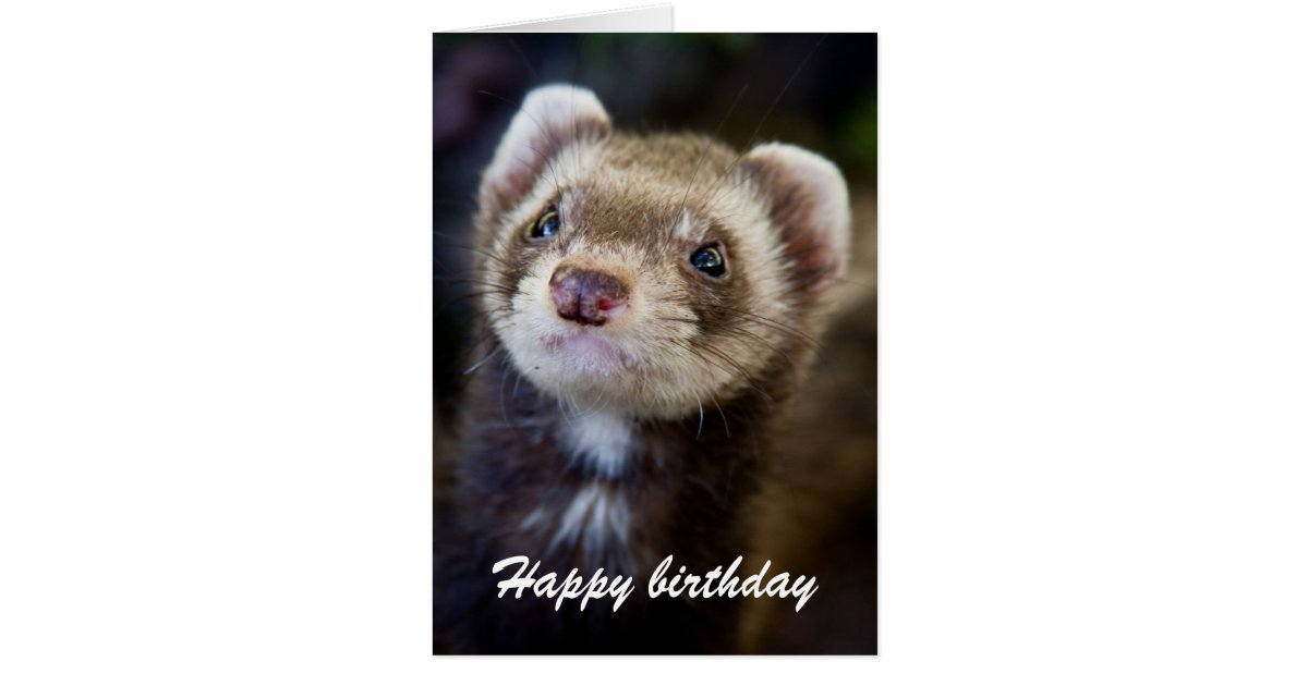 Ferret birthday card – Ferret Birthday Card
