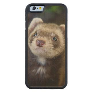 Ferret Carved® Maple iPhone 6 Bumper