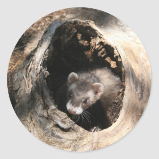 Ferret Classic Round Sticker