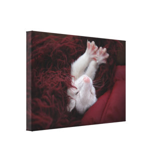 Ferret December - Stretched Canvas Prints