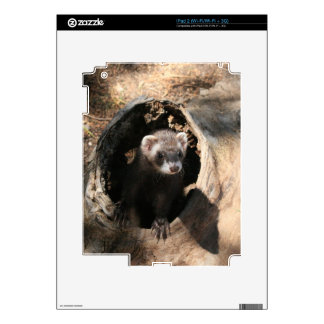 Ferret Face iPad 2 Skins
