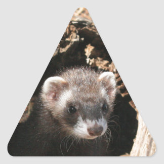 Ferret Face Triangle Sticker