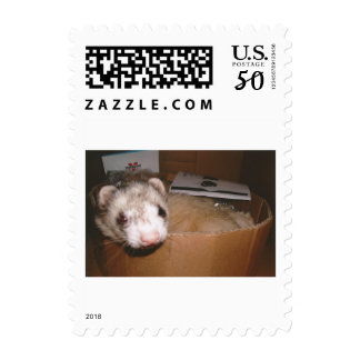 Ferret in a box postage