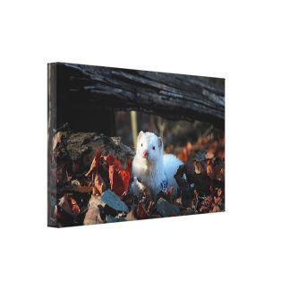 Ferret in the woods - canvas -