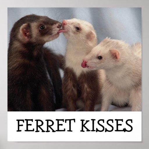 Ferret Kisses Print