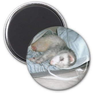 ferret napping 2 inch round magnet