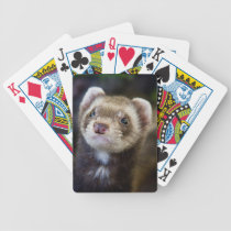 Ferret playing cards