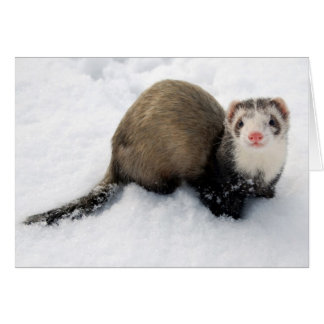 Ferret playing in snow card