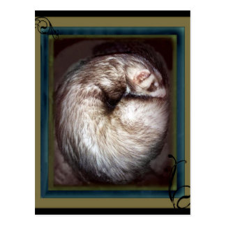 ferret postcards
