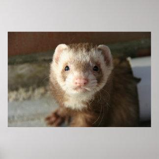 Ferret poster close-up