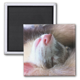 Ferret Sleep Square Magnet