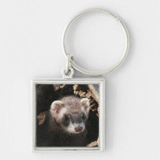 Ferret Small Premium Keychain