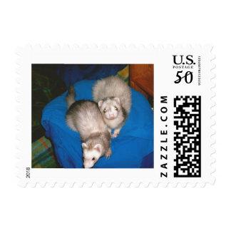 Ferret treat stare postage