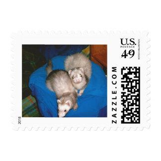 Ferret treat stare postage stamp