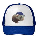 Ferret Wearing Hat