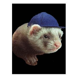 Ferret Wearing Hat Postcard