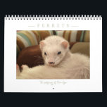 "Ferrets Calendar - 3 -<br><div class=""desc"">Ferrets Calendar - 3 - This beautiful, classy and elegant calendar is the third edition from my Ferret Calendars collection. This Calendar is featuring Nahum, Lil Bear in their sweet moment of ferret life. This calendar is a great way to have 12 images of my Fine Art Ferrets photography. It...</div>"