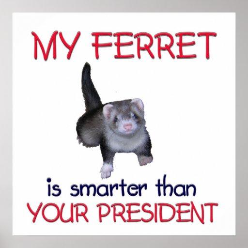 FerretSmarter Poster