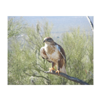 Ferruginous Hawk Gallery Wrapped Canvas