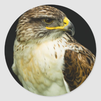 Ferruginous Hawk Classic Round Sticker