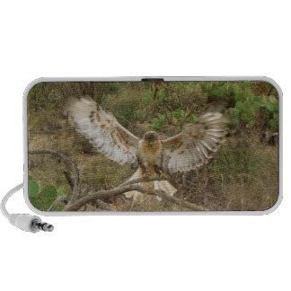Ferruginous Hawk ~ Kimberly P-Chadwick Speaker