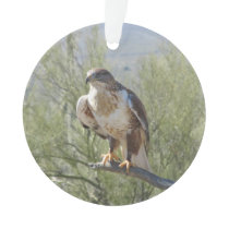 Ferruginous Hawk Ornament