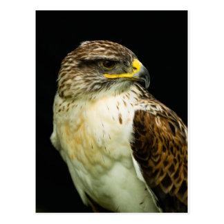 Ferruginous Hawk Postcard