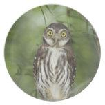 Ferruginous Pygmy-Owl, Glaucidium brasilianum, 2 Melamine Plate