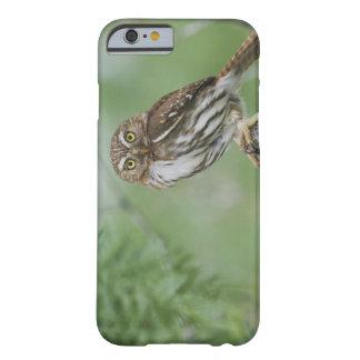 Ferruginous Pygmy-Owl, Glaucidium brasilianum, 3 Barely There iPhone 6 Case