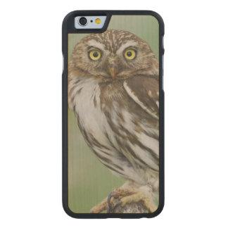 Ferruginous Pygmy-Owl, Glaucidium brasilianum, 3 Carved Maple iPhone 6 Slim Case