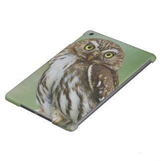 Ferruginous Pygmy-Owl, Glaucidium brasilianum, 3 iPad Air Case