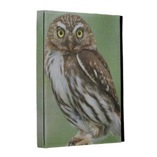 Ferruginous Pygmy-Owl, Glaucidium brasilianum, 3 iPad Cases