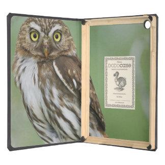 Ferruginous Pygmy-Owl, Glaucidium brasilianum, 3 iPad Air Covers