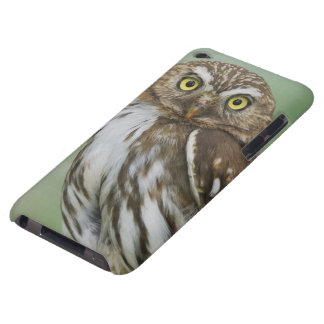 Ferruginous Pygmy-Owl, Glaucidium brasilianum, 3 Case-Mate iPod Touch Case