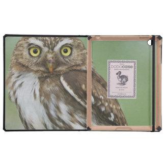 Ferruginous Pygmy-Owl, Glaucidium brasilianum, 3 Covers For iPad