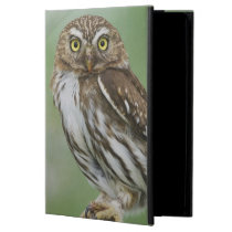 Ferruginous Pygmy-Owl, Glaucidium brasilianum, 3 Case For iPad Air