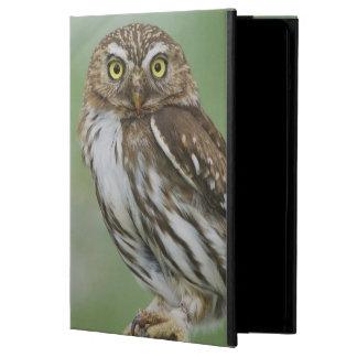 Ferruginous Pygmy-Owl, Glaucidium brasilianum, 3 Case For iPad Air