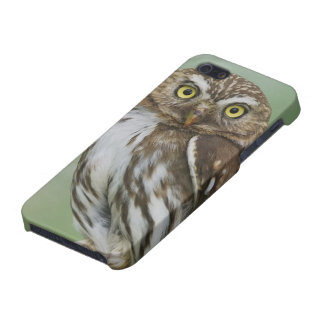 Ferruginous Pygmy-Owl, Glaucidium brasilianum, 3 Cover For iPhone SE/5/5s