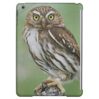 Ferruginous Pygmy-Owl, Glaucidium brasilianum, 3 iPad Air Cases