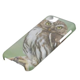 Ferruginous Pygmy-Owl, Glaucidium brasilianum, 3 iPhone 5C Case