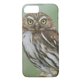 Ferruginous Pygmy-Owl, Glaucidium brasilianum, 3 iPhone 7 Case