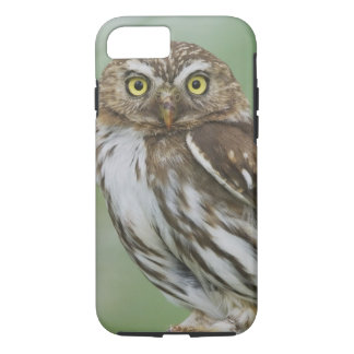 Ferruginous Pygmy-Owl, Glaucidium brasilianum, 3 iPhone 7 Case