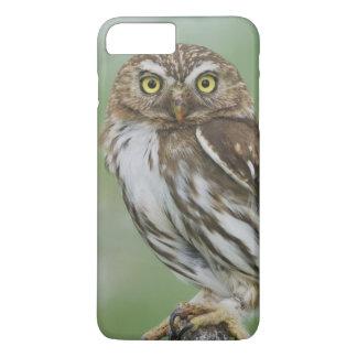 Ferruginous Pygmy-Owl, Glaucidium brasilianum, 3 iPhone 7 Plus Case