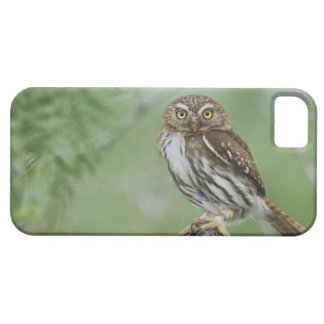 Ferruginous Pygmy-Owl, Glaucidium brasilianum, 3 iPhone SE/5/5s Case