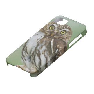 Ferruginous Pygmy-Owl, Glaucidium brasilianum, 3 iPhone SE/5/5s Case