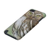 Ferruginous Pygmy-Owl, Glaucidium brasilianum, 3 iPod Touch 5G Cover