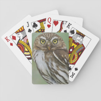 Ferruginous Pygmy-Owl, Glaucidium brasilianum, 3 Playing Cards